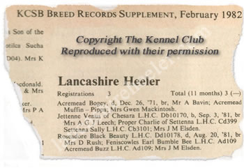 The First Lancashire Heeler to be recognised was Acremead Bogey