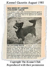 The Lancashire Heeler was recognised by the UK Kennel Club in July 1981