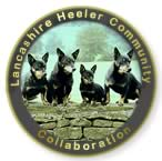 The Lancashire Heeler Pedigree database is a project of collaboration amongst the Lancashire Heeler Community